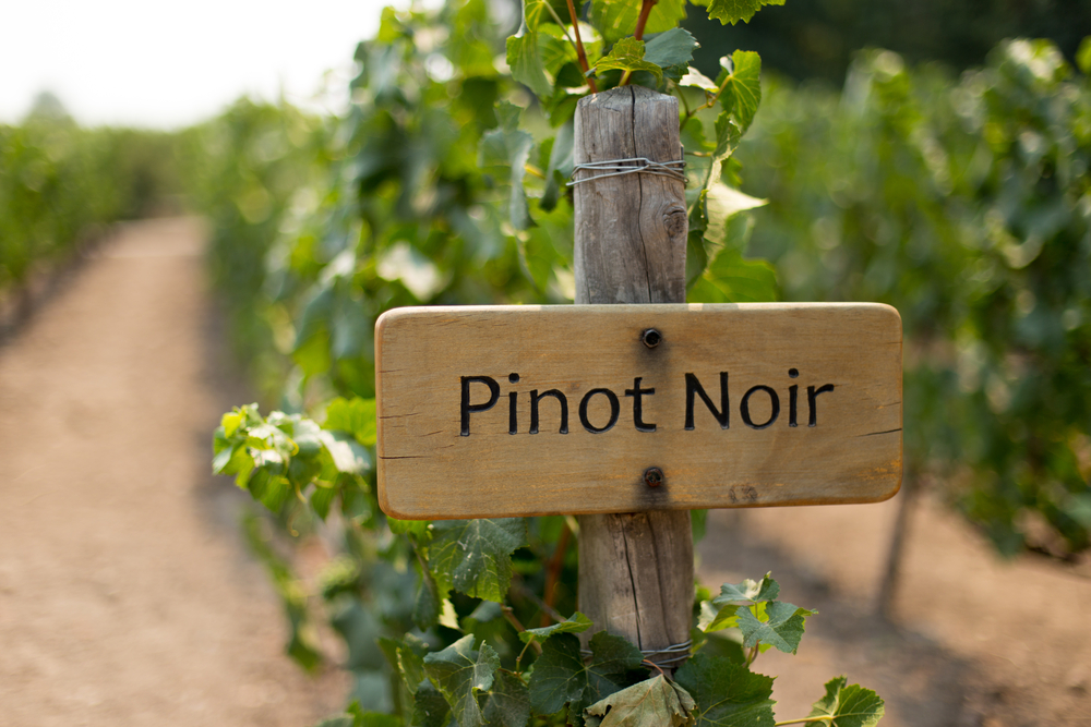 Pinot Noir: Cultivation, Characteristics, Growing Regions and Variations